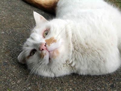 猫のマロンちゃん