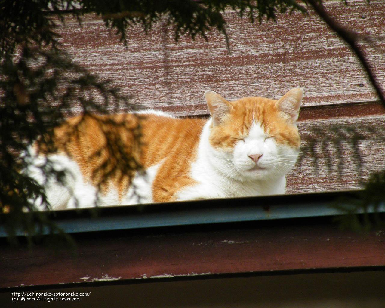 猫壁紙 ポストカード うちの猫 そとの猫